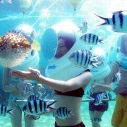 di bộ dưới biển 1
