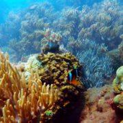 di bộ dưới biển 3