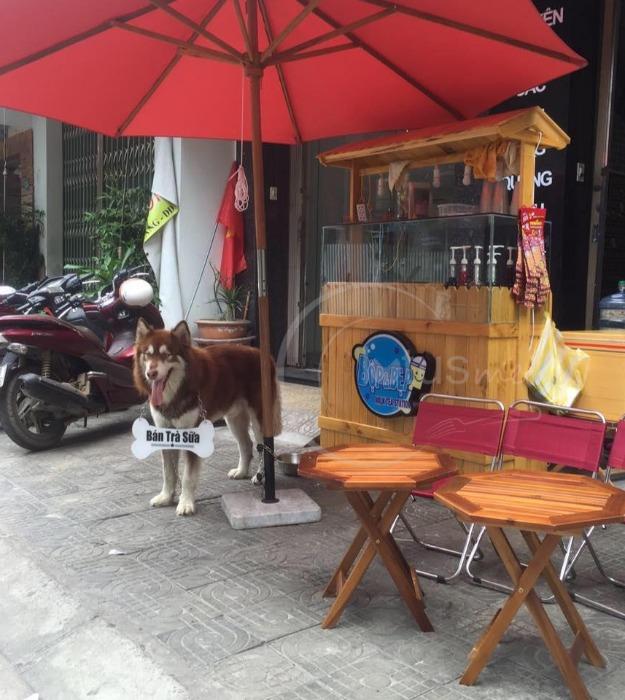 Lạc lối ở 4 quán cà phê thú cưng siêu cute tại Đà Nẵng-0-yourdanang.net