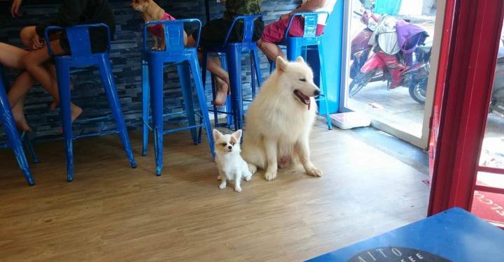 Lạc lối ở 4 quán cà phê thú cưng siêu cute tại Đà Nẵng-1-yourdanang.net